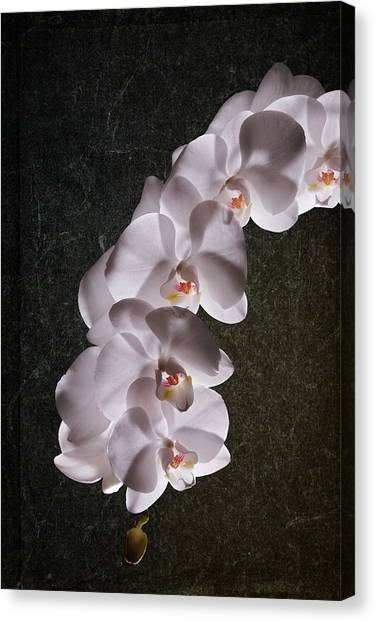 Orchid Canvas Print - White Orchid Still Life by Tom Mc Nemar