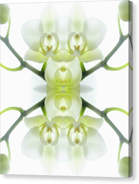 White Orchid With Stems Canvas Print by Silvia Otte
