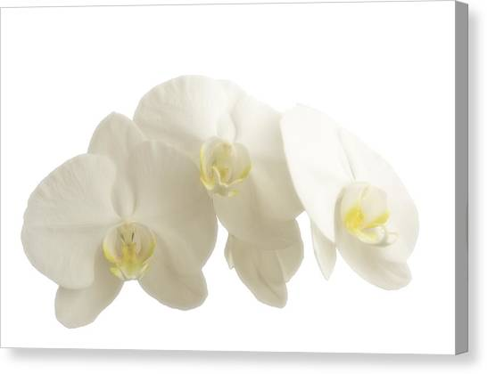 White Orchids On White Canvas Print