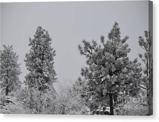 White Out Canvas Print by Greg Patzer