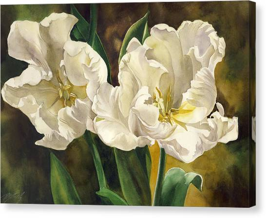 White Parrot Tulips Canvas Print by Alfred Ng