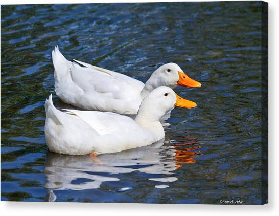 White Pekin Ducks #2 Canvas Print
