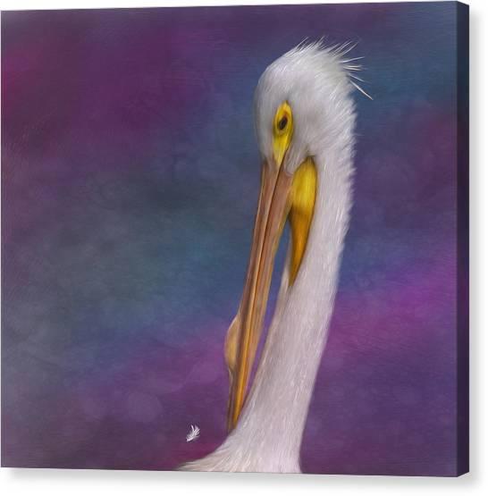 White Pelican Canvas Print by Hazel Billingsley