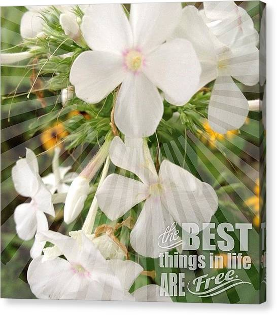 Gardens Canvas Print - #white #phlox #garden #flower #bloom by Teresa Mucha