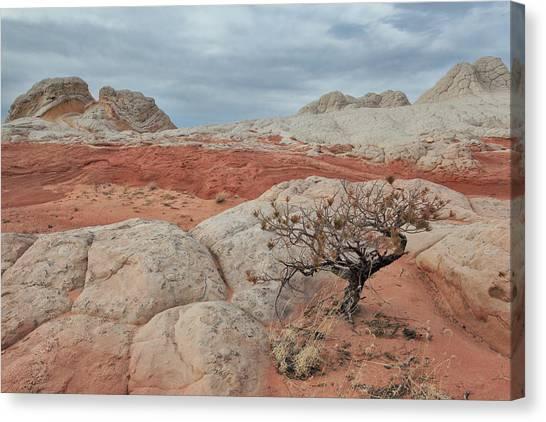 White Pocket Canvas Print by Darryl Wilkinson