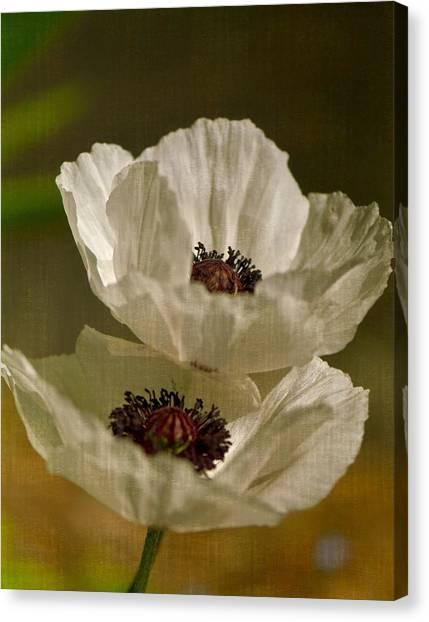 White Poppies Canvas Print