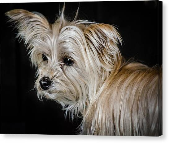 White Puppy Canvas Print