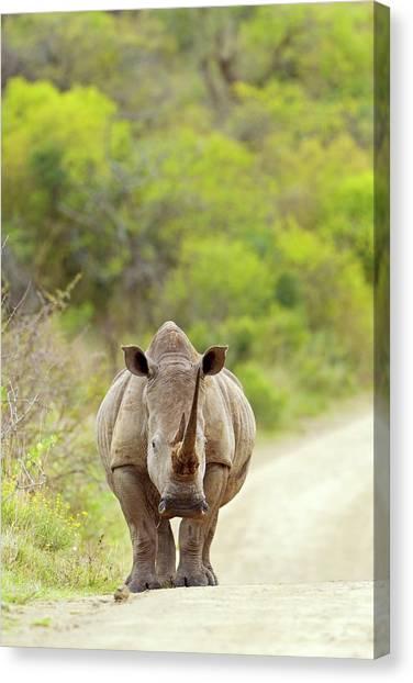 One Horned Rhino Canvas Print - White Rhino by Bildagentur-online/mcphoto-schaef