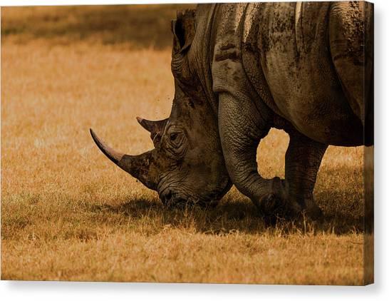 Rhinos Canvas Print - White Rhino by Massimo Mei