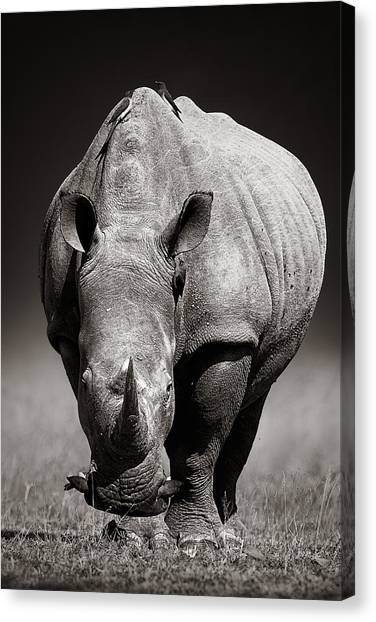 Rhinos Canvas Print - White Rhinoceros  In Due-tone by Johan Swanepoel