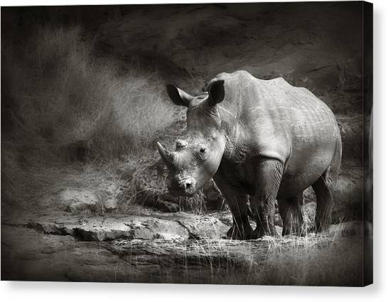 Rhinos Canvas Print - White Rhinoceros by Johan Swanepoel