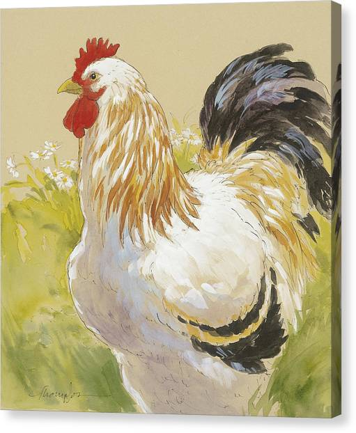 Roosters Canvas Print - White Rooster by Tracie Thompson