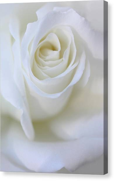 White Rose Floral Whispers Canvas Print