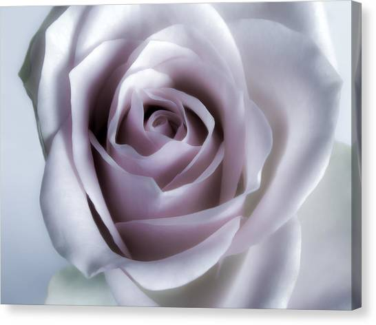 White Roses Flowers Art Work Photography Canvas Print