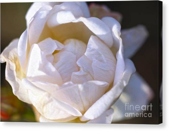 White Rose Canvas Print by Nur Roy