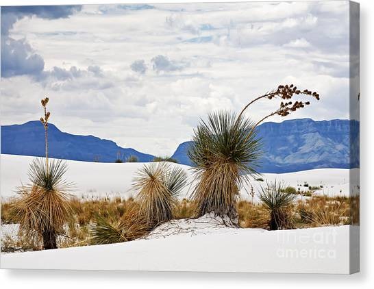 Missles Canvas Print - White Sands by Dee Johnson
