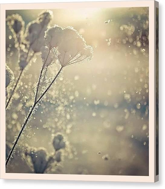 Snowflakes Canvas Print - White Shadow by Raimond Klavins