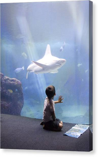 White Shark And Young Boy Canvas Print