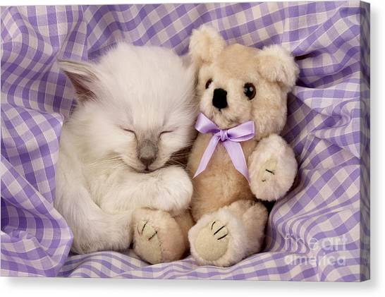 Teddybear Canvas Print - White Sleeping Cat by Greg Cuddiford