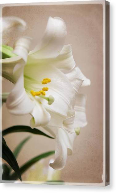 White Softness Canvas Print