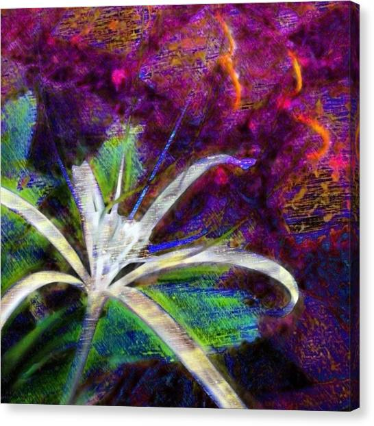 White Spider Flower On Orange And Plum - Square Canvas Print