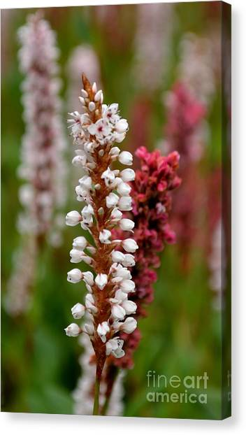 White Stalk Flower Canvas Print