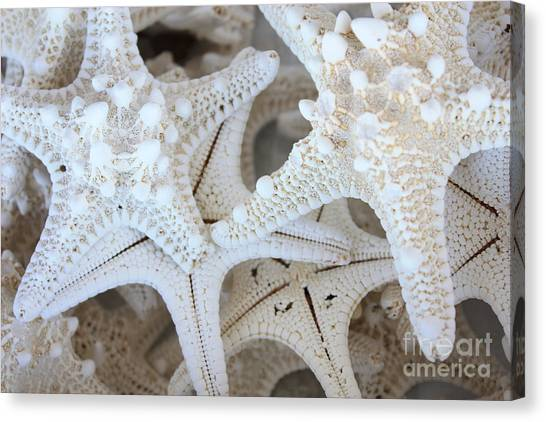 Coastal Art Canvas Print - White Starfish by Carol Groenen