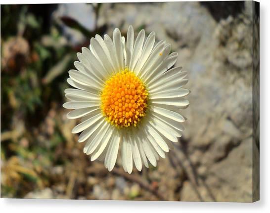 White Wild Flower Canvas Print