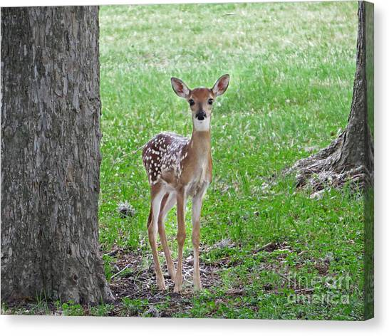 White-tailed Fawn - Face Of Innocence Canvas Print