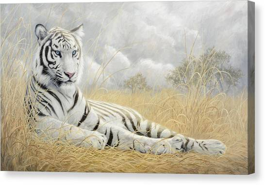 Bengal Tiger Canvas Print - White Tiger by Lucie Bilodeau