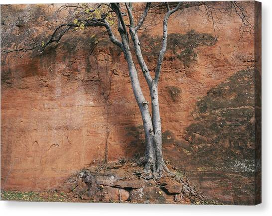 White Tree And Red Rock Face Canvas Print