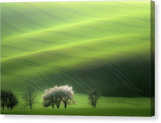 Grass Canvas Print - White Trio by Marek Boguszak