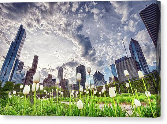 White Tulips And Skyline Canvas Print