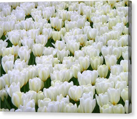White Tulips Canvas Print by F Salem