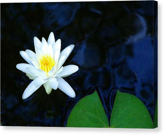White Water Lilly Abstract Canvas Print by Judith Russell-Tooth