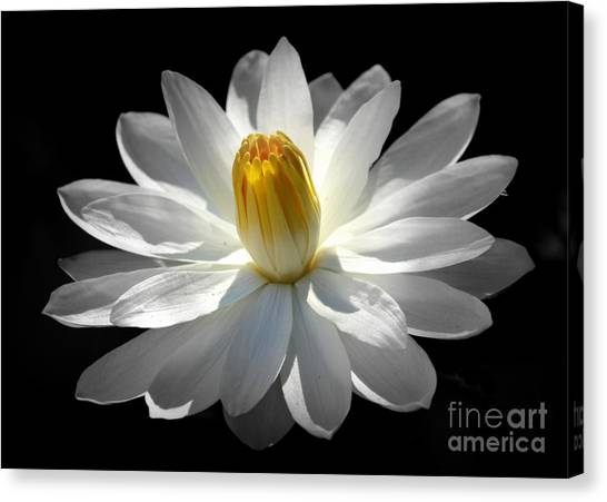 White Water Lily #2 Canvas Print