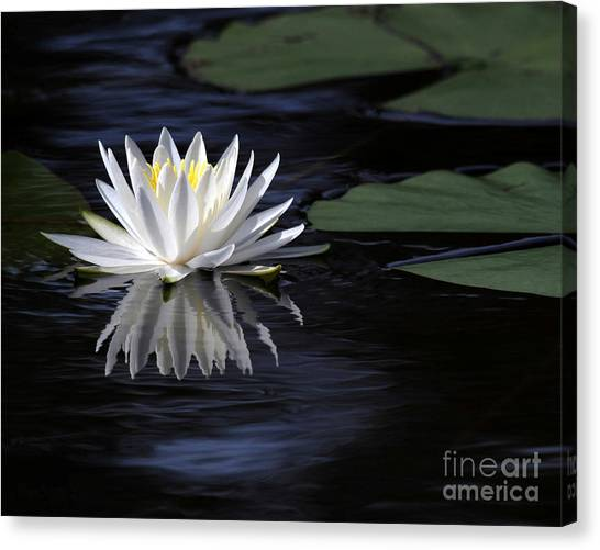 White Water Lily Left Canvas Print