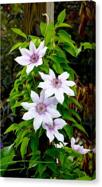 White With Purple Flowers 2 Canvas Print