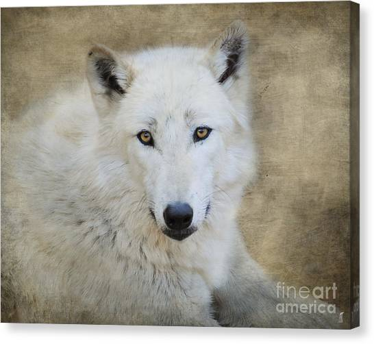 Arctic Wolf Canvas Print - White Wolf by Jai Johnson