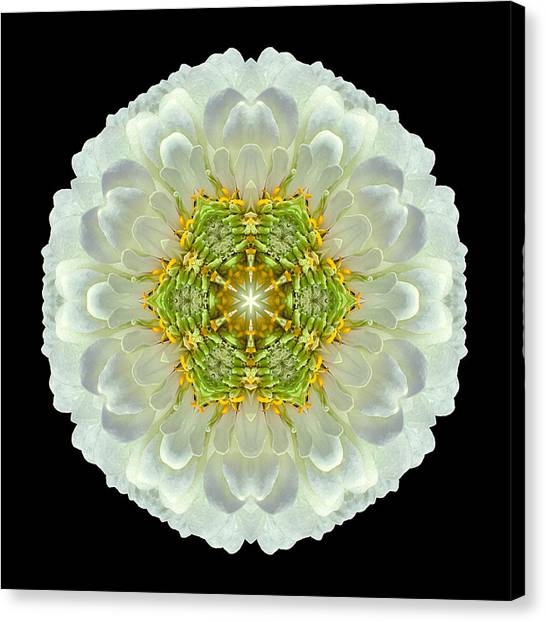 White Zinnia Elegans V Flower Mandala Canvas Print
