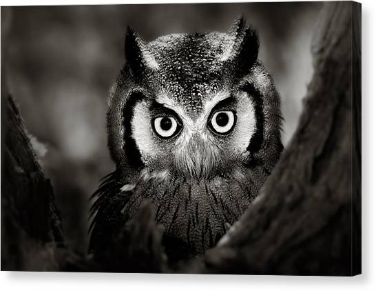 Ears Canvas Print - Whitefaced Owl by Johan Swanepoel