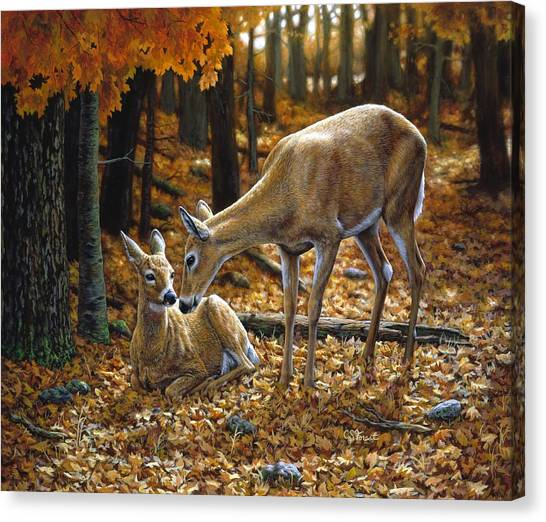 Deer Canvas Print - Whitetail Deer - Autumn Innocence 2 by Crista Forest