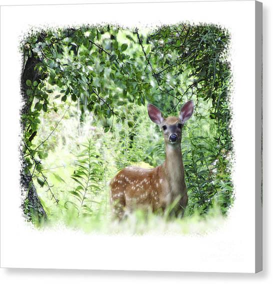 Whitetail Fawn Canvas Print