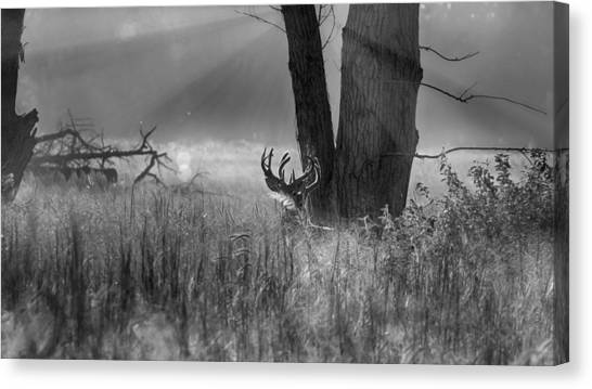 Whitetail Morning Canvas Print
