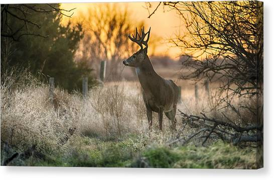 Whitetail Sunset Canvas Print