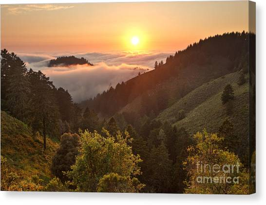 Redwood Forest Canvas Print - Whittemore Gulch At Dusk by Matt Tilghman