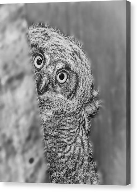 Canvas Print - Who's There? by Peg Runyan