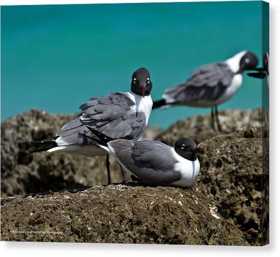 Why You Looking? Canvas Print