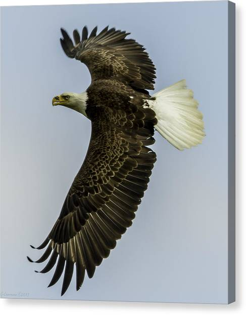 Wicket Wing Span  Canvas Print by Glenn Lawrence
