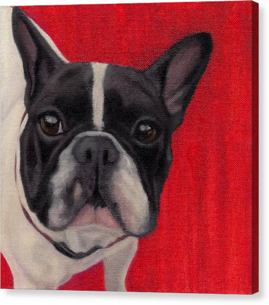 French Bull Dogs Canvas Print - Wide-eyed Red by Dana Feagin